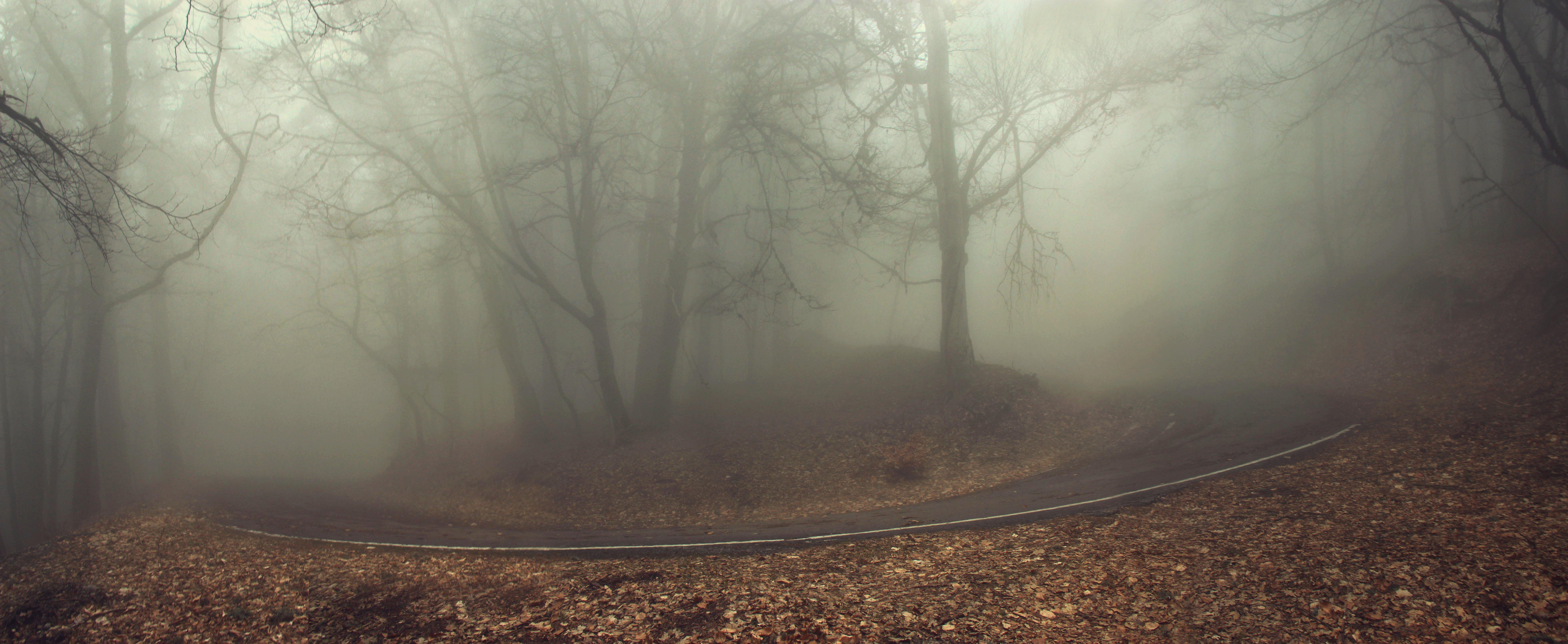 Туман, дорога, Ирина Гайворонская
