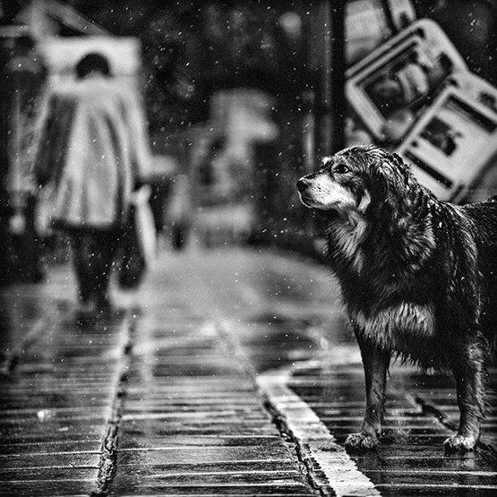dog, собака, чб, bw, Denis Buchel (Денис Бучель)