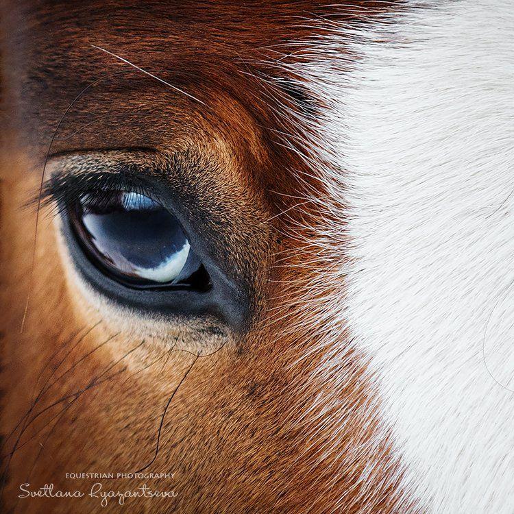 horse, лошадь, лошади, portrait, Svetlana Ryazantseva