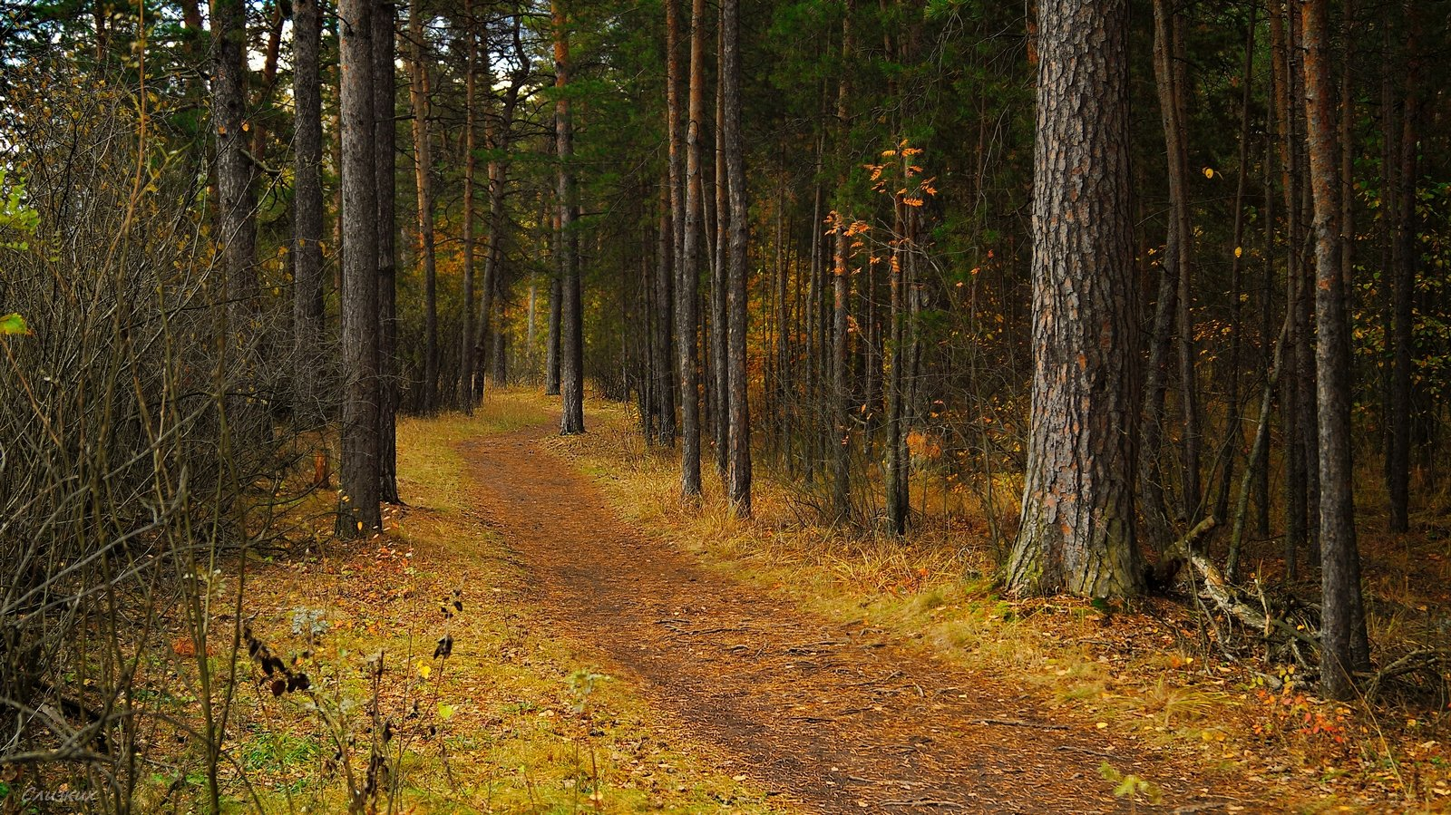 пейзаж,лес,тропинка,дорога,осень,лес,бор, Инаида