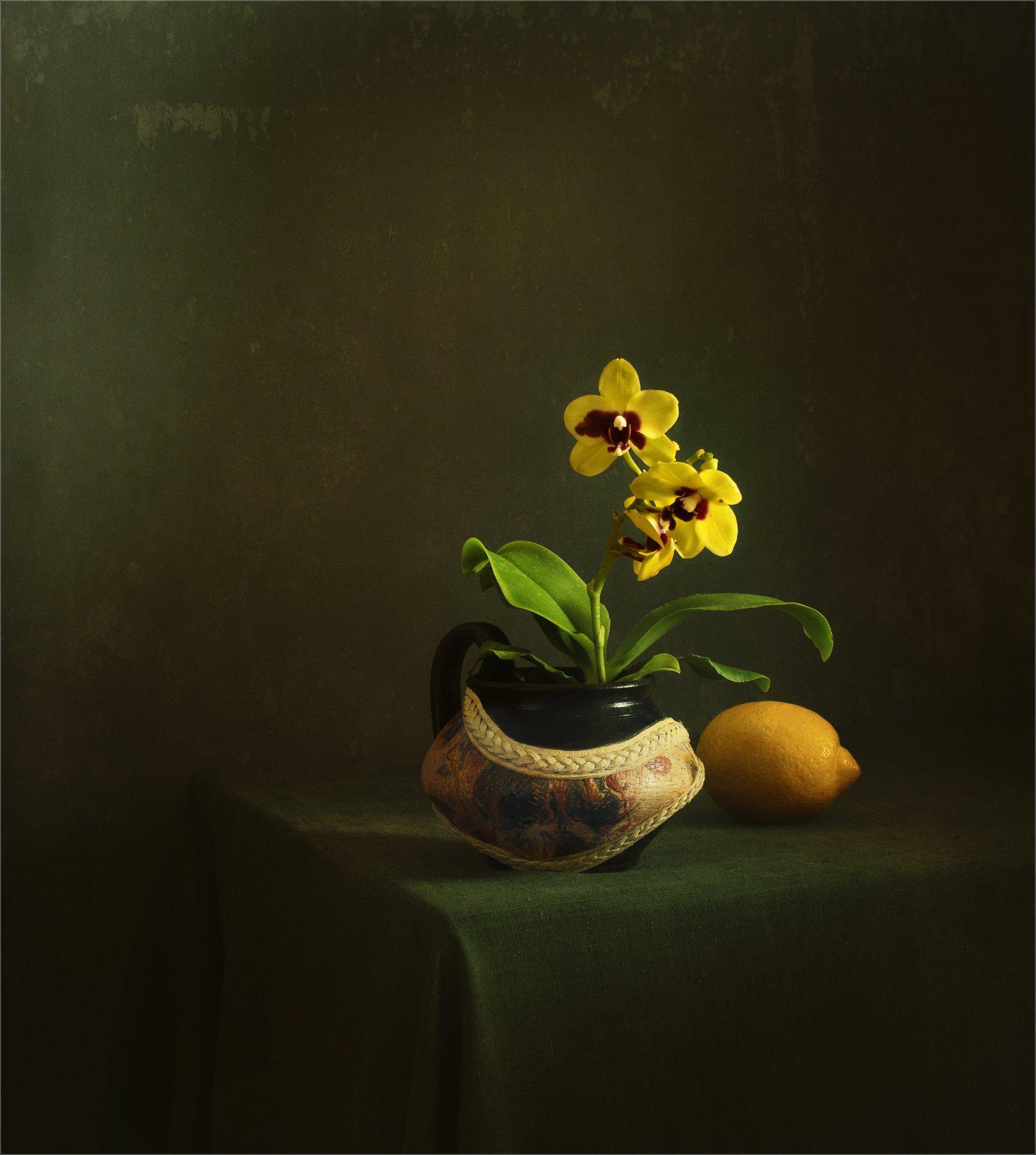 still life, натюрморт,    растение, природа,  винтаж, , цветы, орхидея ,  минимализм, лимон, цитрус, еда, ретро, Михаил MSH