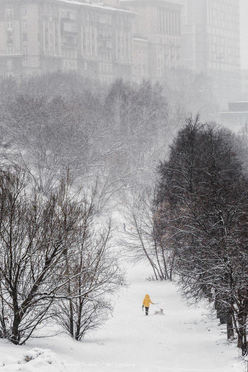 Люди, город, улица, жанр, человек, животное, собака, снегопад, деревья, снег, зима, цвет, желтый, , АлександрТутаев
