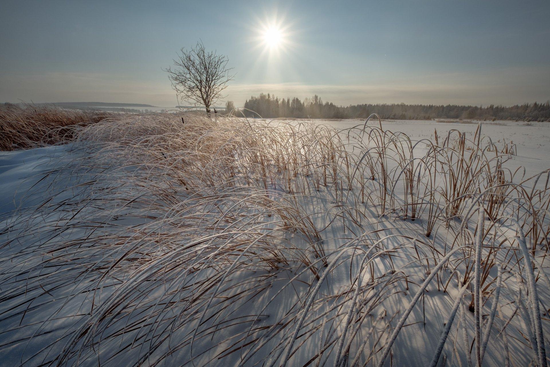 пейзаж, зима, болото, снег, утро, рассвет, восход, мороз, холод, чусовая, пермь, пермский край, путешествие, приключения, Андрей Чиж