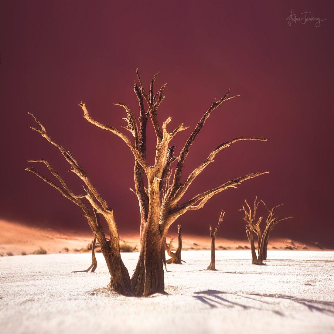 Tree, Sossusvlei, Deadvlei, Namibia, valley, Desert, Namib, sand, dune, dead  Дерево, мертвая долина, Намибия, Намиб, пустыня, дюны, песок, плато, Антон Янковой (www.photo-travel.com)