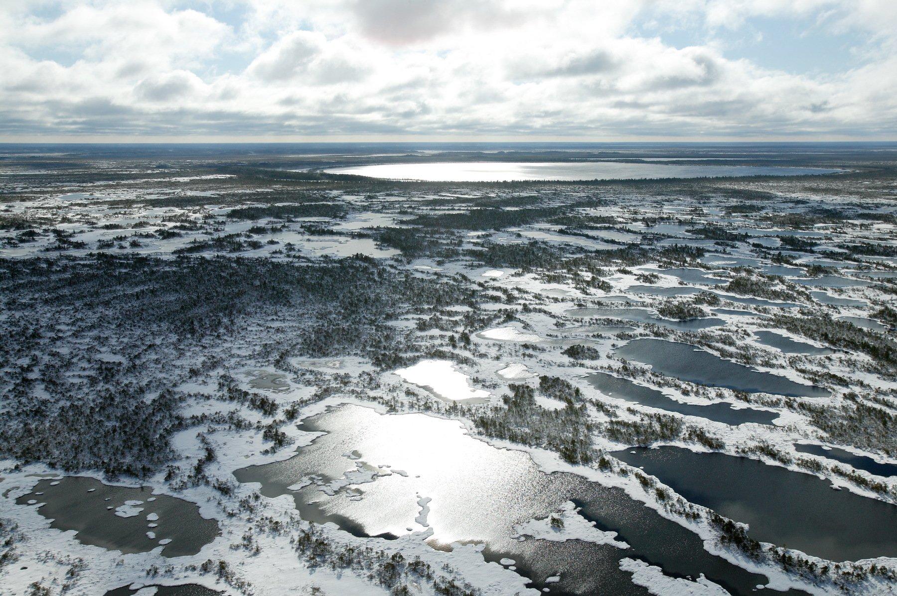 Западная Сибирь Томская область васюганское болото, Дронов Михаил