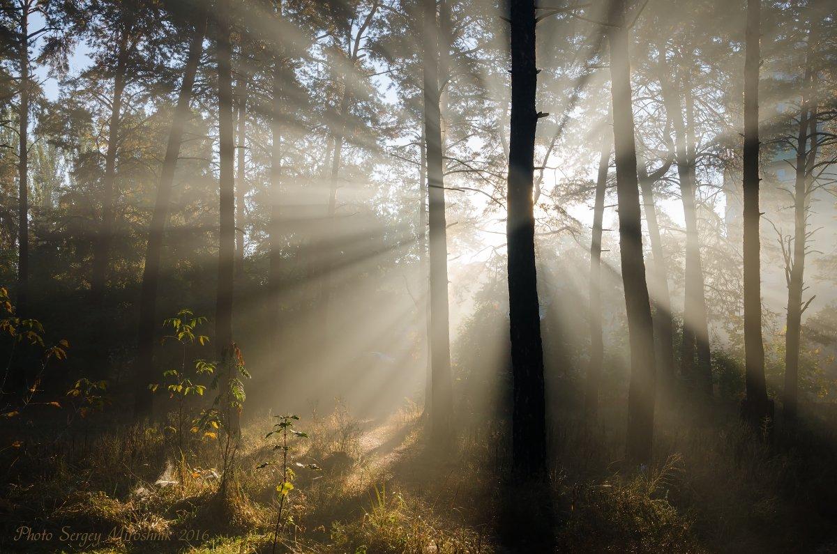 пейзаж, природа, лес, осень, солнце, утро, октябрь, сосна, лучи,  украина, Сергій Мірошник