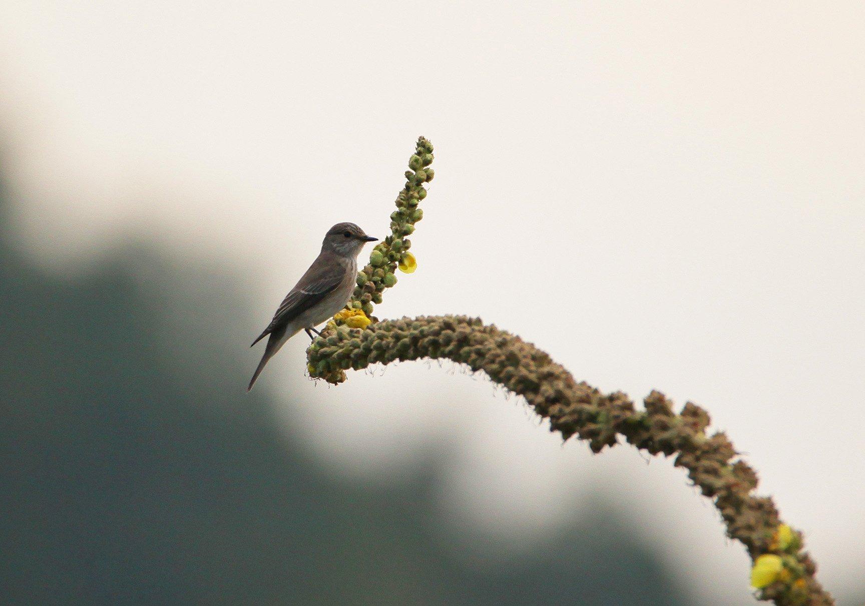 птица,птицы,природа., Марат Магов