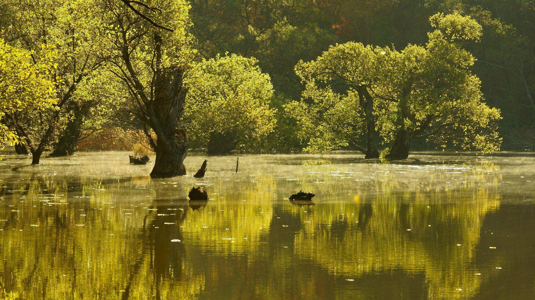 korea,autumn,reservoir,reflection,water,sunlight,backlight,morning,bud tree,, Shin