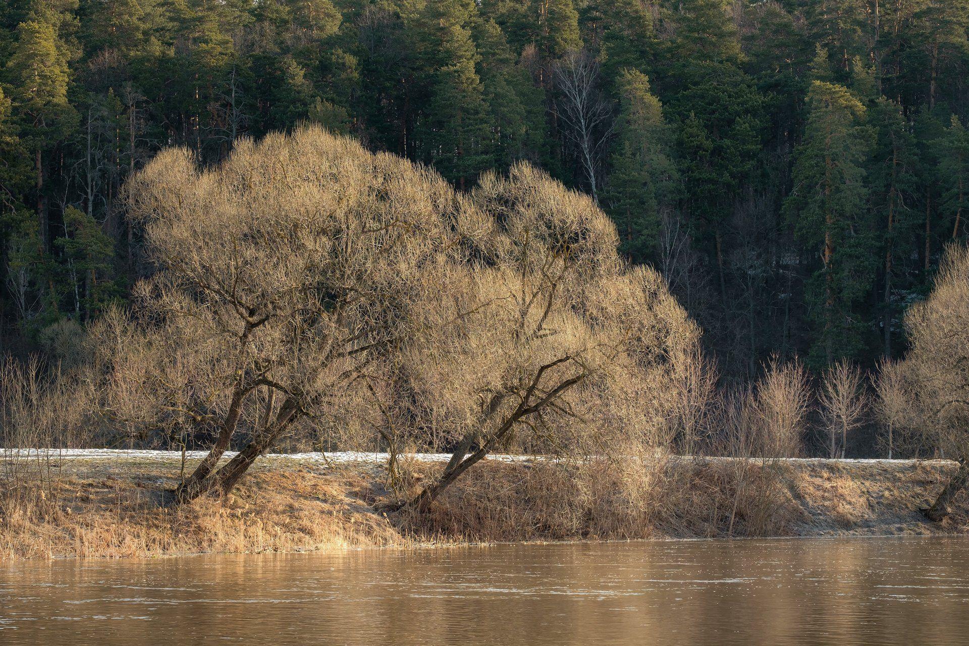 пейзаж, весна, берег, река, разлив, снег, пахра, лес, деревья, подольск, Андрей Чиж