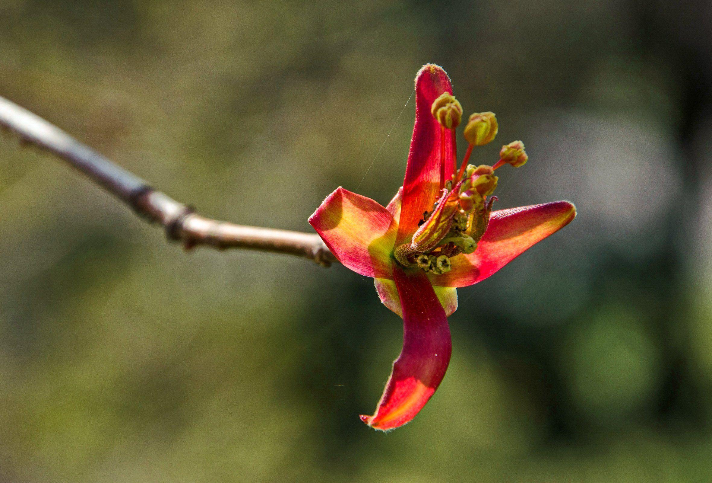 апрель, дерево, цвет, макро, Валерий Наумов