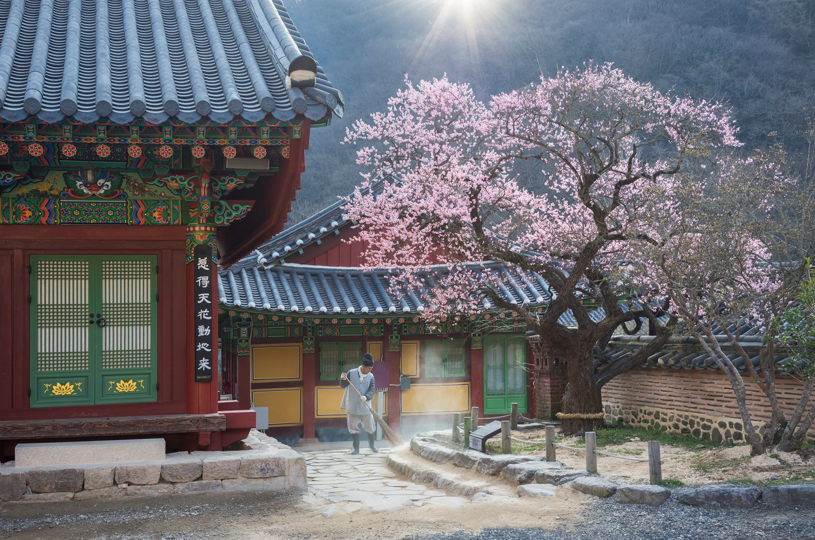 buddhism, working, culture, spring, blossom, 류재윤
