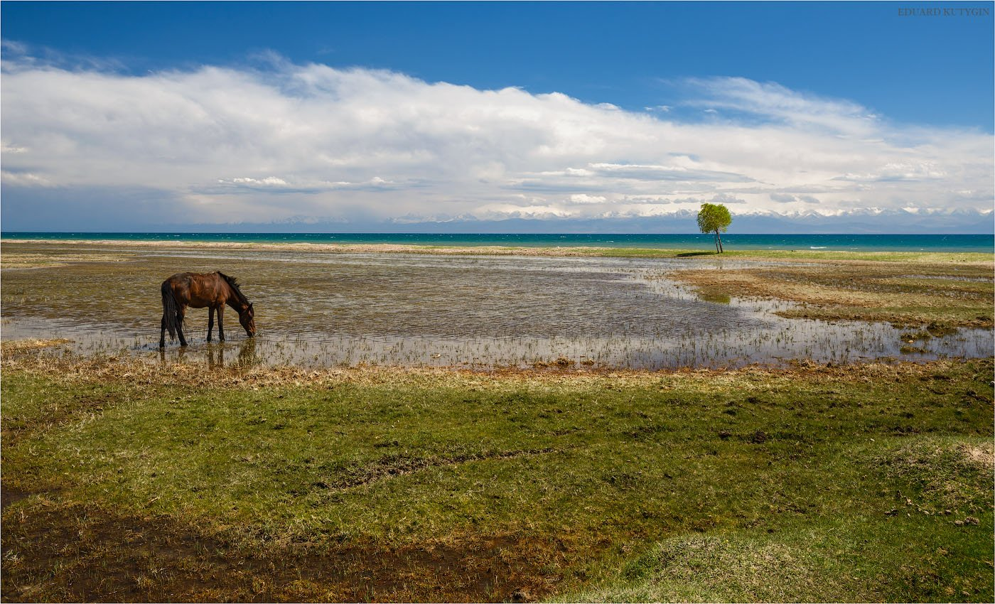 Киргизия, иссыккуль, Кутыгин Эдуард