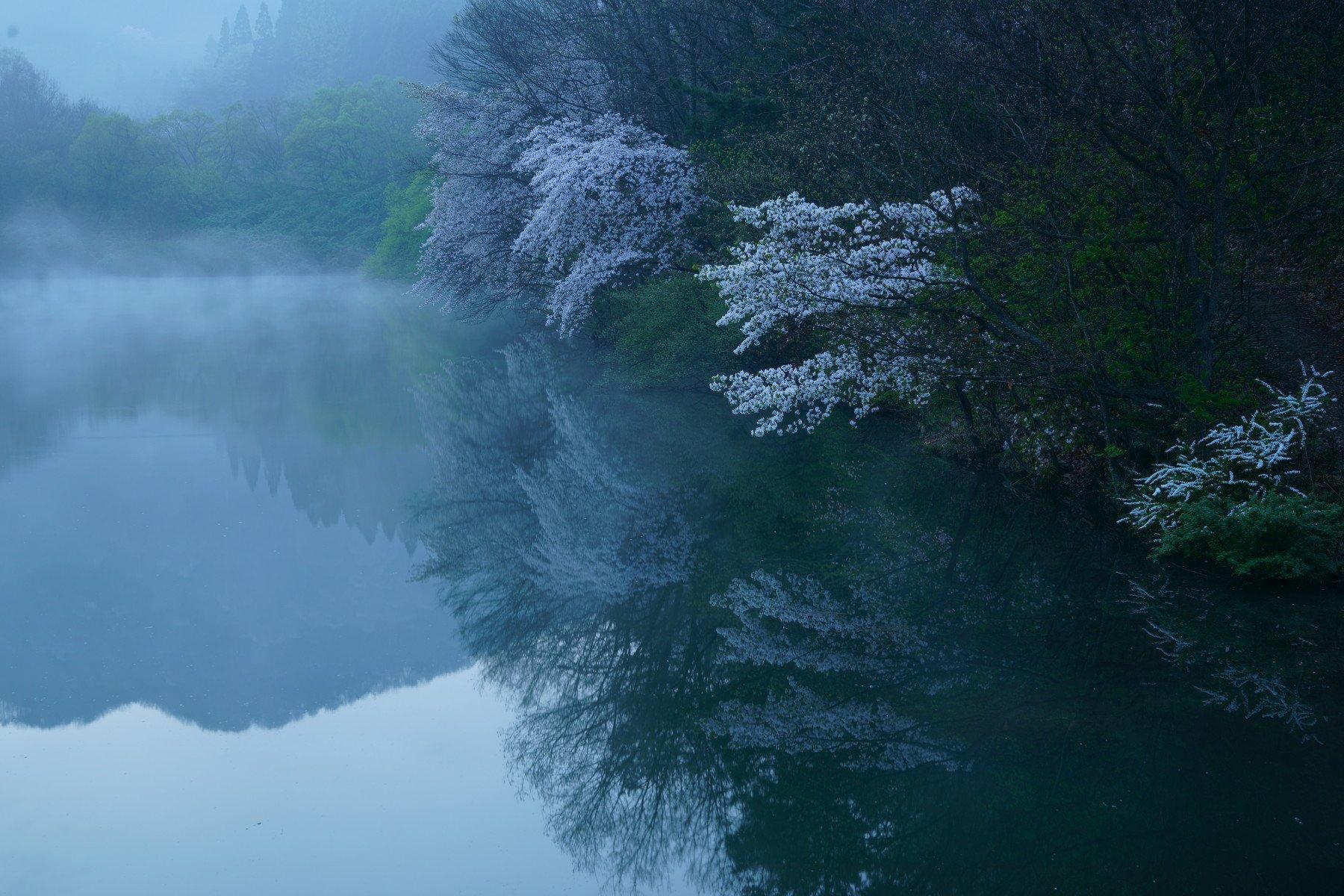 korea,spring,reservoir,morning,cherry blossom,fog,mountain,landscape, Shin