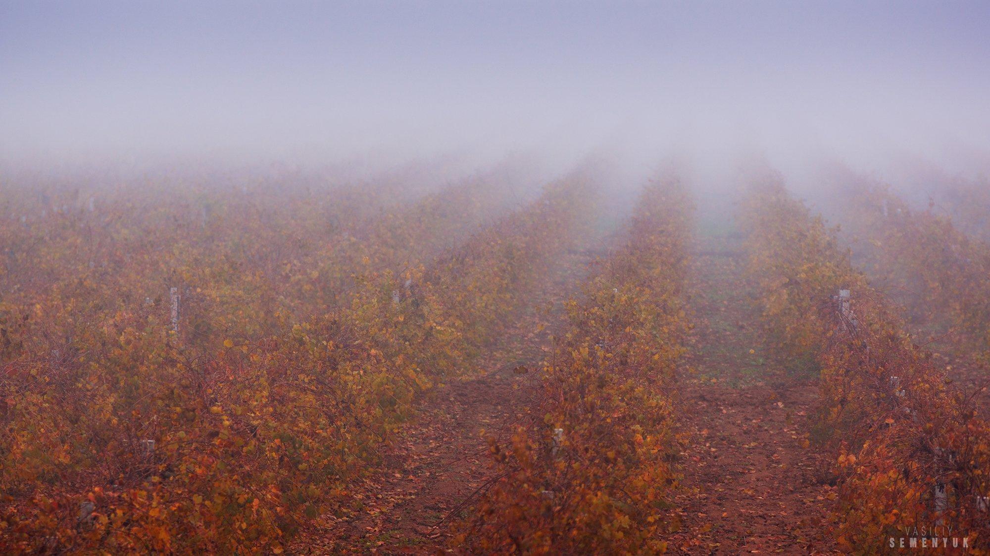 крым, осень, виноградник, туман, минимализм., Семенюк Василий