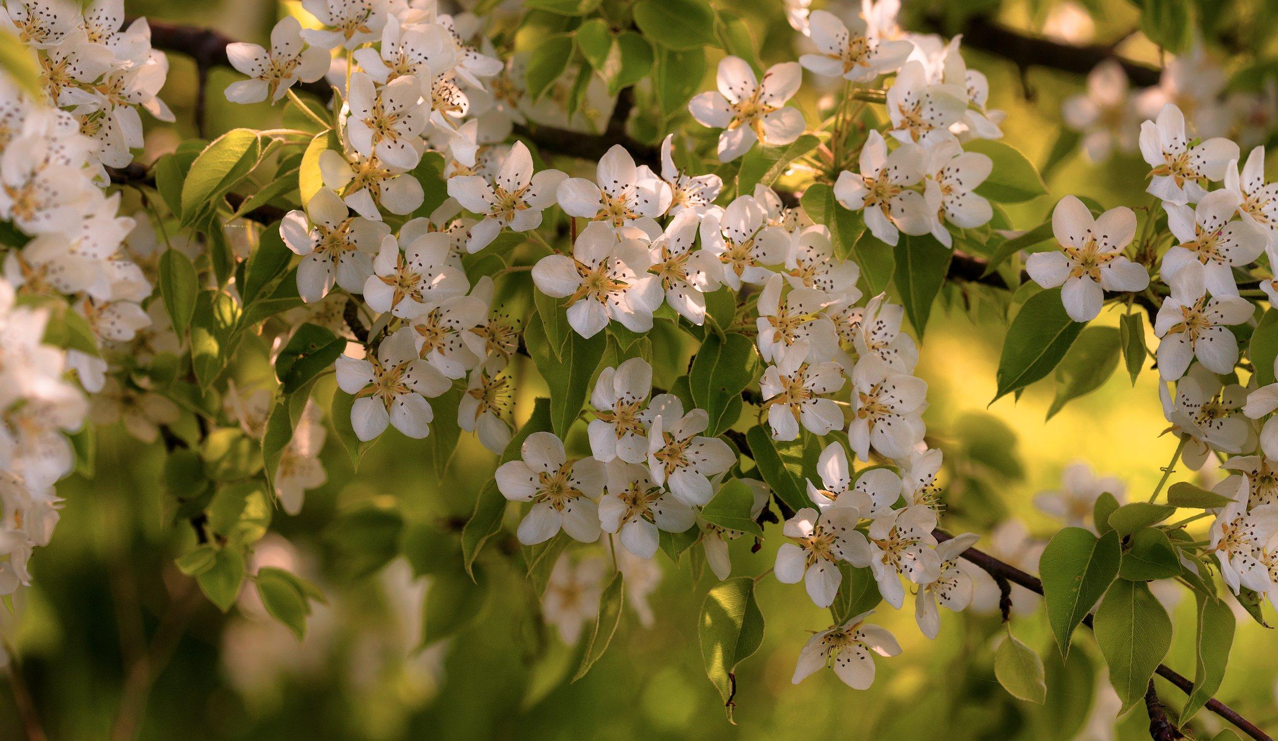 весна, Александр Плеханов