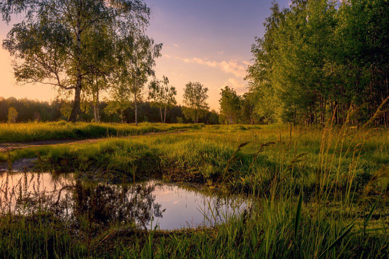 луг, весна, май, вечер, лужа, Галанзовская Оксана