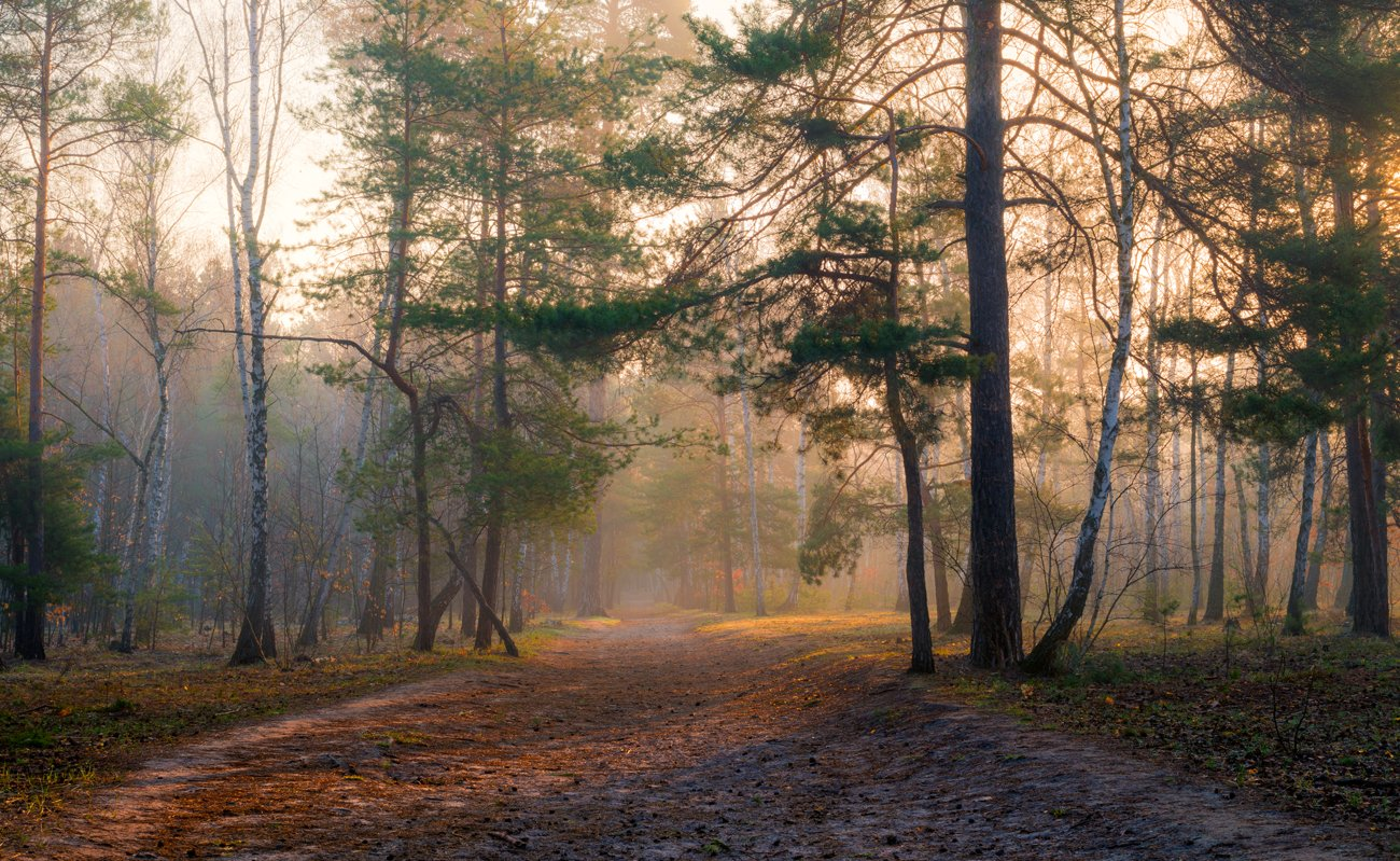 лес, весна, апрель, рассвет, утро, свет, тропа, туман, Галанзовская Оксана
