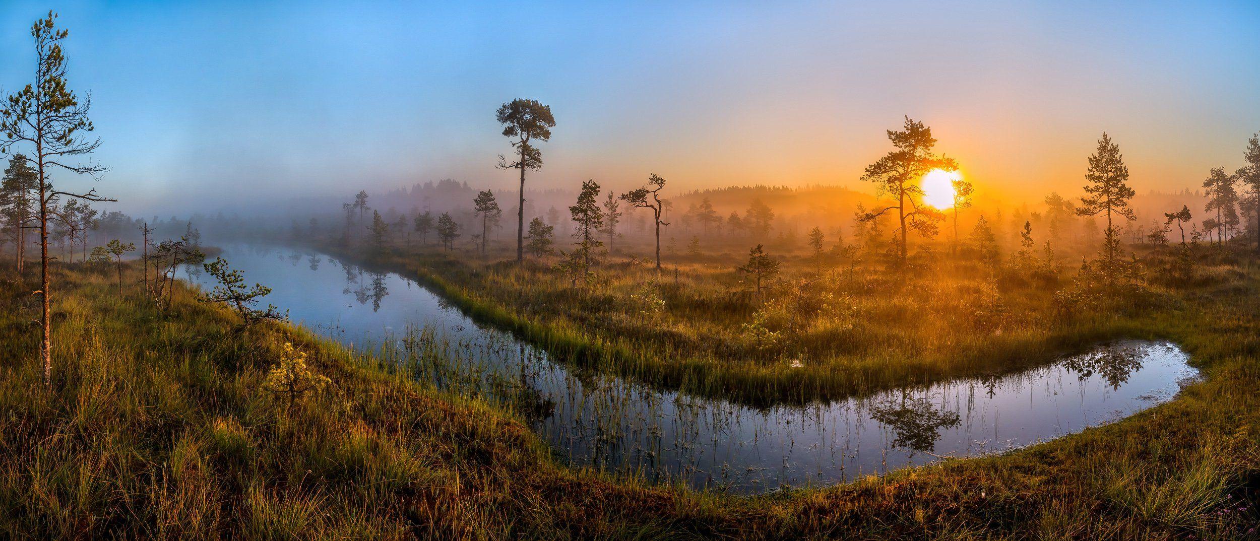 ленинградская область, деревья, сосна, озеро, рассвет, туман, трава, болото, лето, солнце., Лашков Фёдор