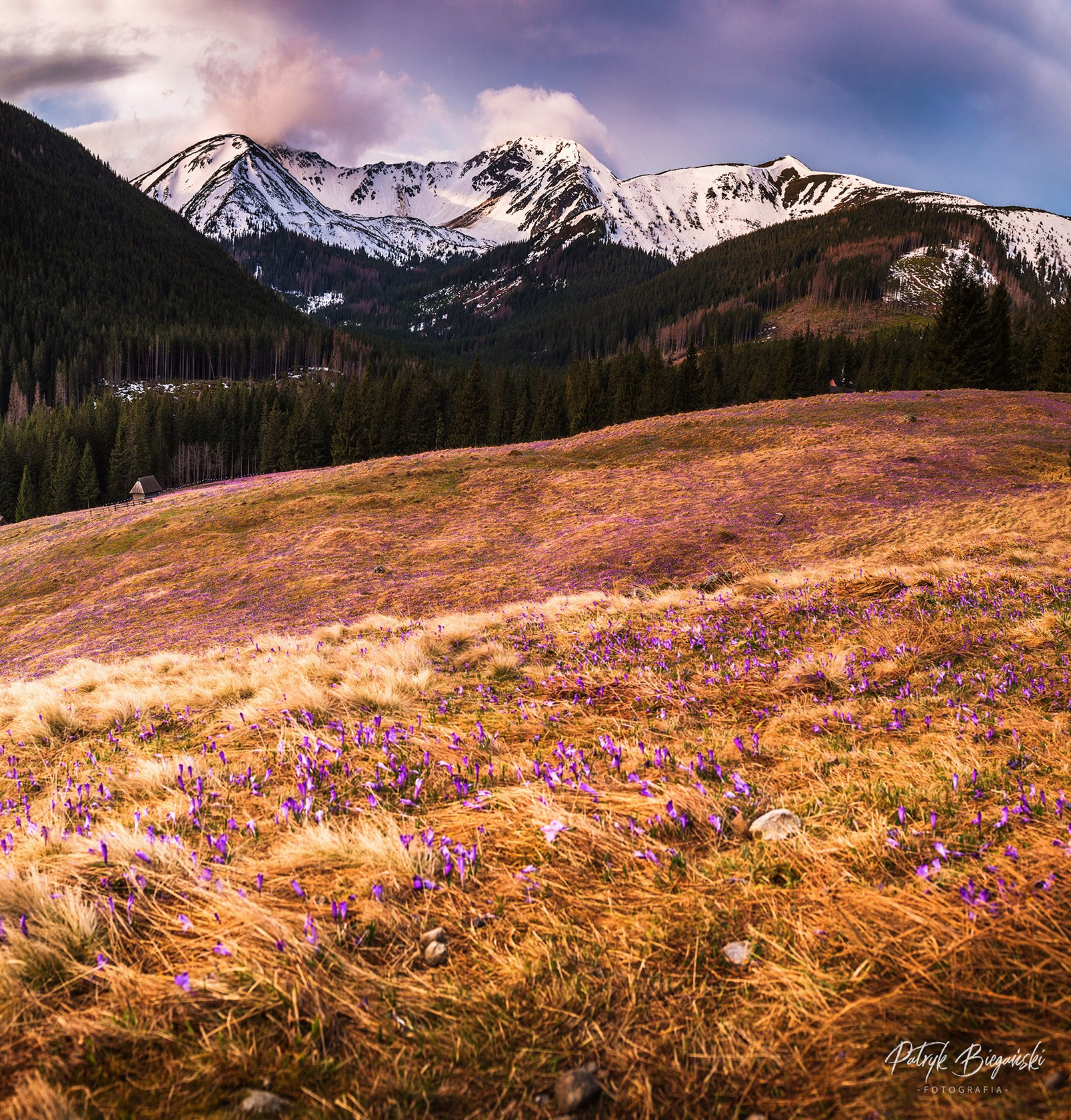 mountains, poland, tatry, flowers, spring, colors, sky, clouds, sunrise, morning, golden hour,, Patryk Biegański