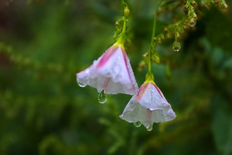дождь, капли, Виктор Бут