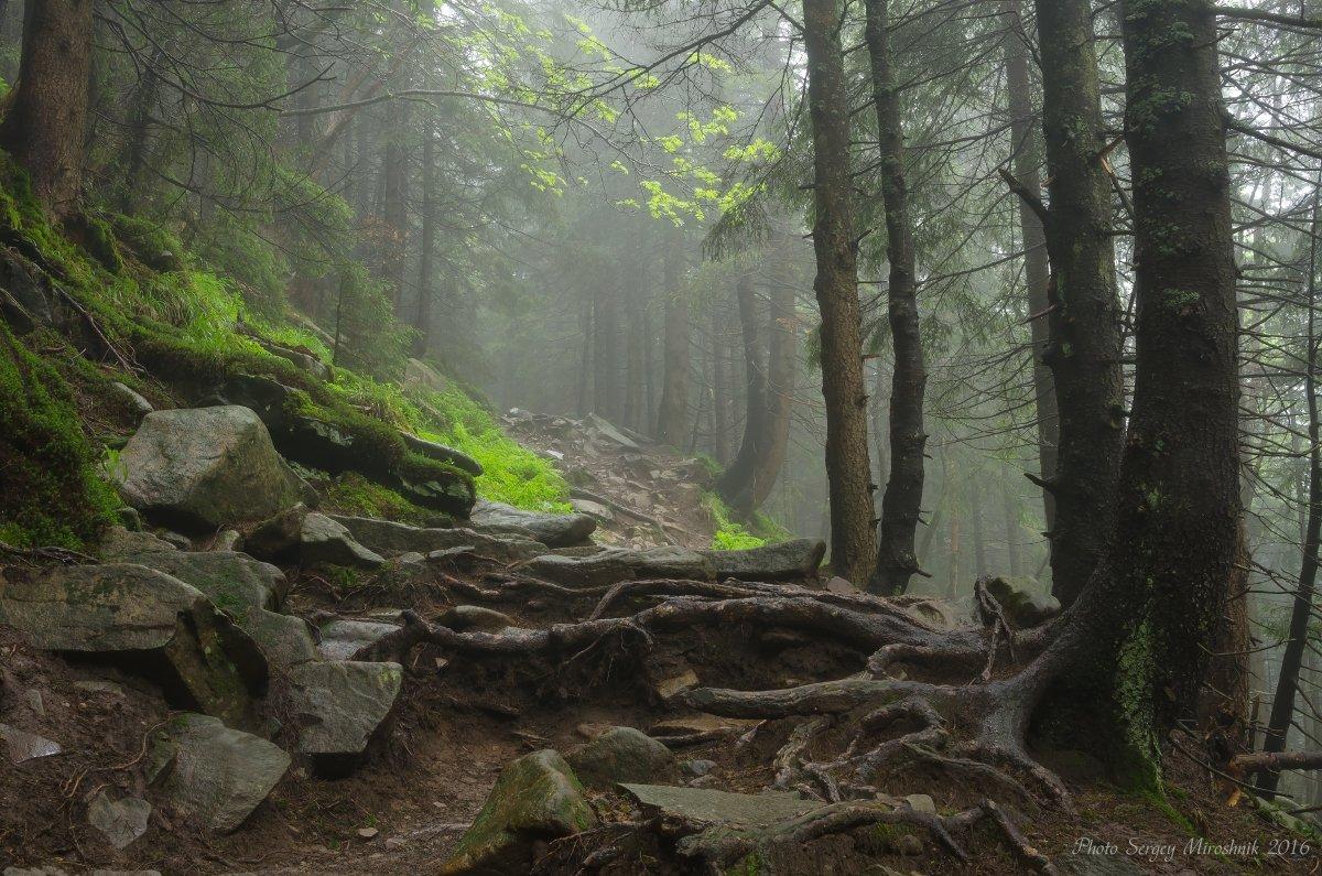 пейзаж, природа, лес, горы лето, туман, утро, путешествие, трекинг, тропа, июнь, камни, украина, карпаты, Сергій Мірошник