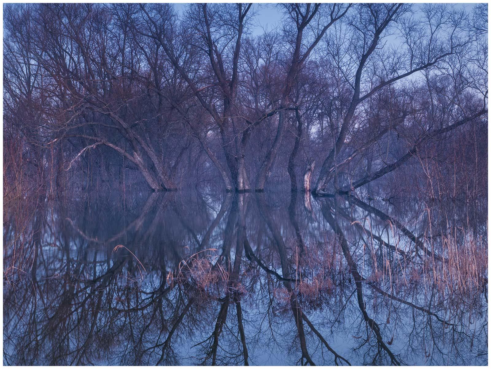 весна, деревья, отражения, пейзаж, разлив, рассвет, сумерки, утро, весенний разлив, паводок, деревья в воде, Станислав Саламанов
