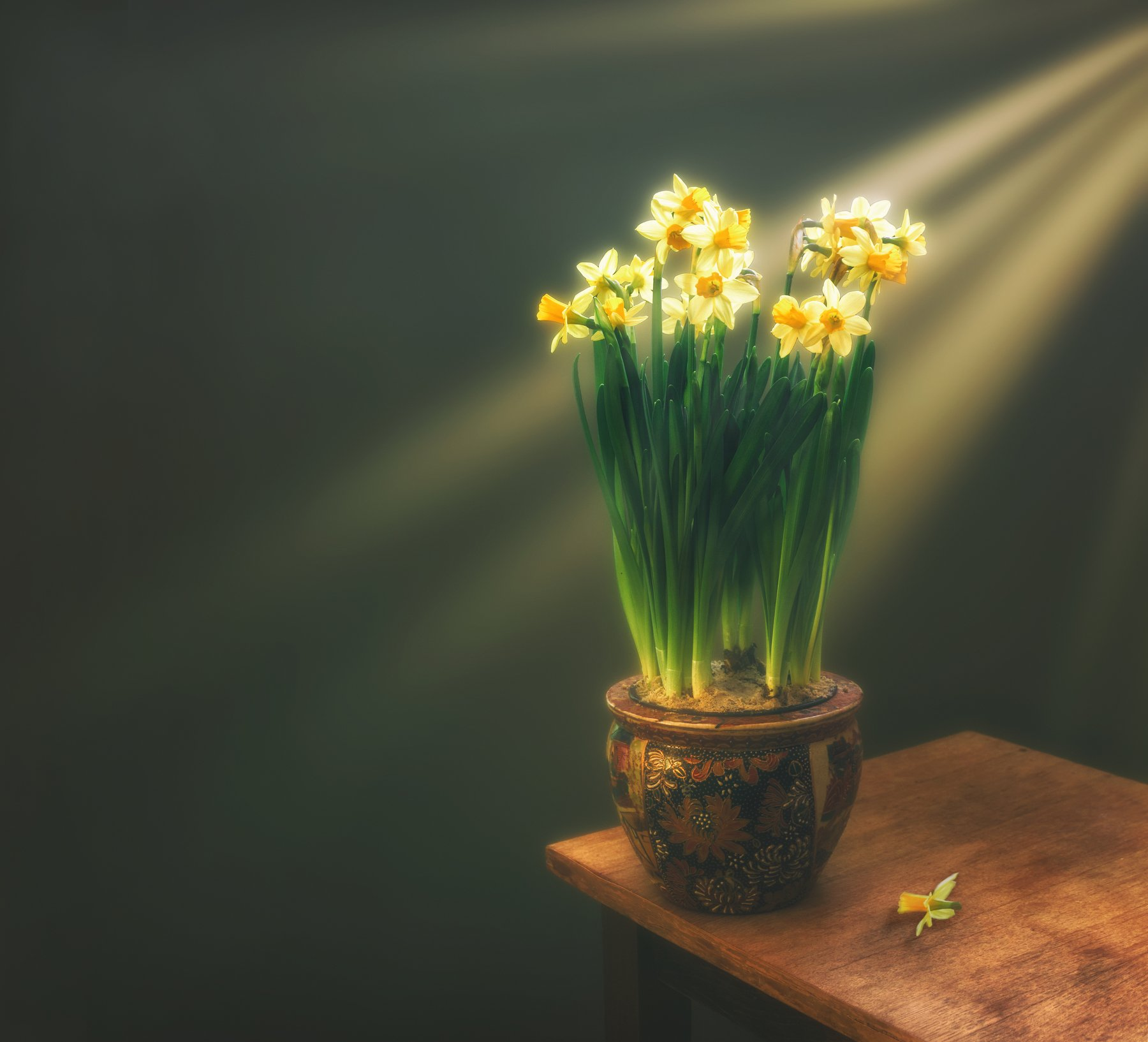 still life, натюрморт,    растение, природа,  винтаж, , цветы,  минимализм, нарциссы, солнечный свет, солнечные лучи, весна, букет, запах, аромат,, Михаил MSH
