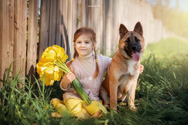 girl, dog, portrait, девочка, собака, акита, портрет, весна, spring, тюльпаны, цветы, Юлия Сафонова