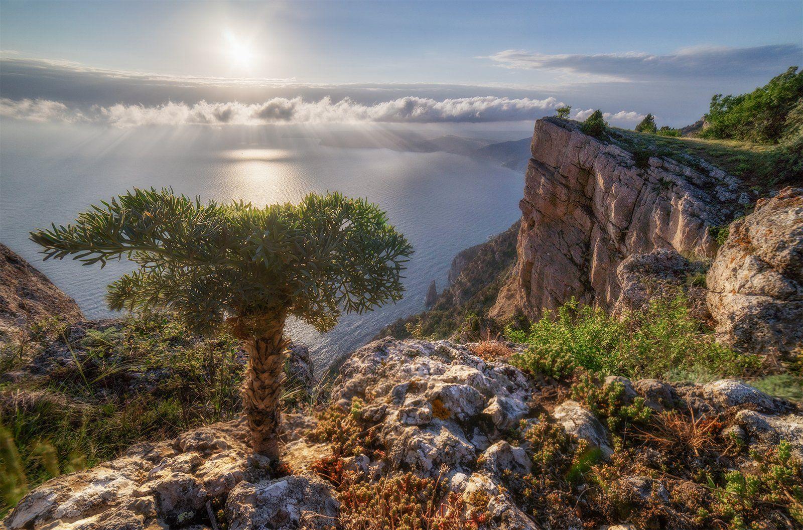 пейзаж, море, горы, весна, крым, дерево, Макс