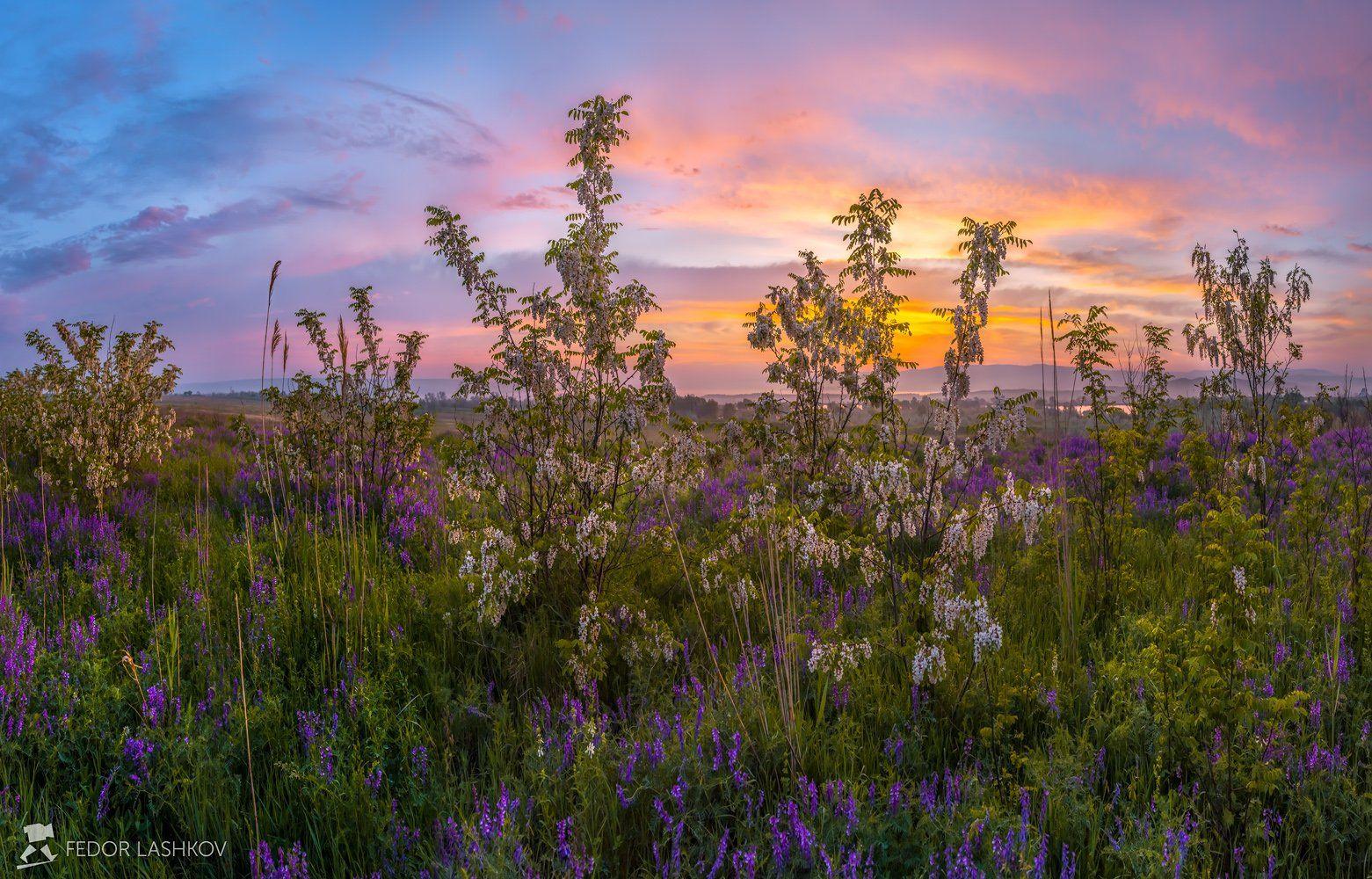pentax645z, pentaxrussia, pentax, ставропольский край,  путешествие, фотоальбом, цветы, природа, рассвет, облака, горошек, акация, луг, степь, трава,, Лашков Фёдор