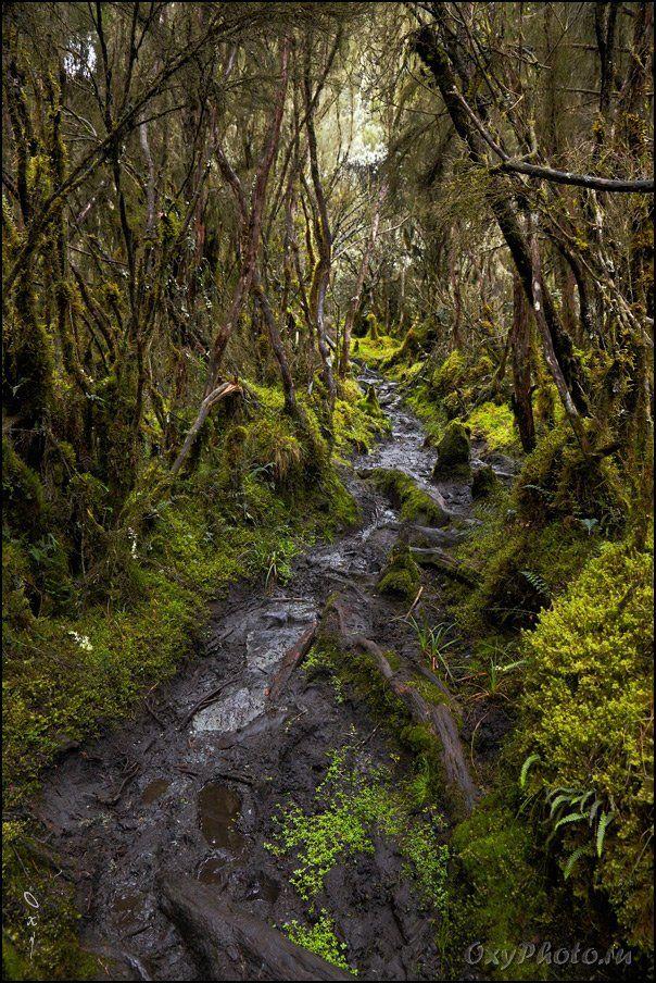 africa, rainforest, rwenzori, uganda, африка, дождевой лес, рувензори, уганда, Оксана Борц
