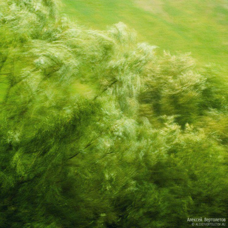 природа, листва, алексей вертолетов, Алексей Вертолетов
