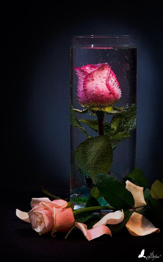 натюрморт,розы, цветы,вода, Ворон