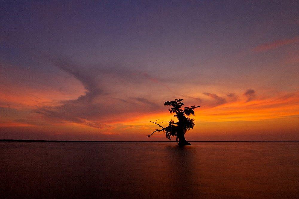 louisiana, lake, tree, swaps, sunset, Евгений Васенёв