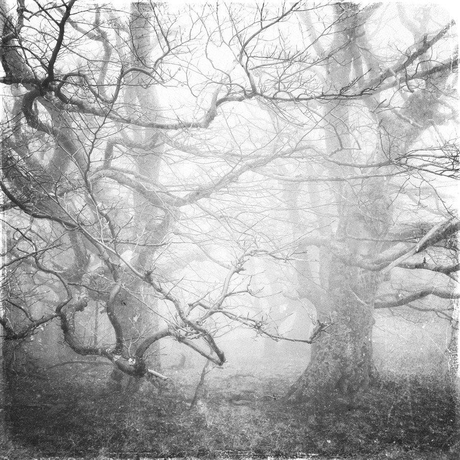 пейзаж, туман, деревья, Ivan Dzyuba