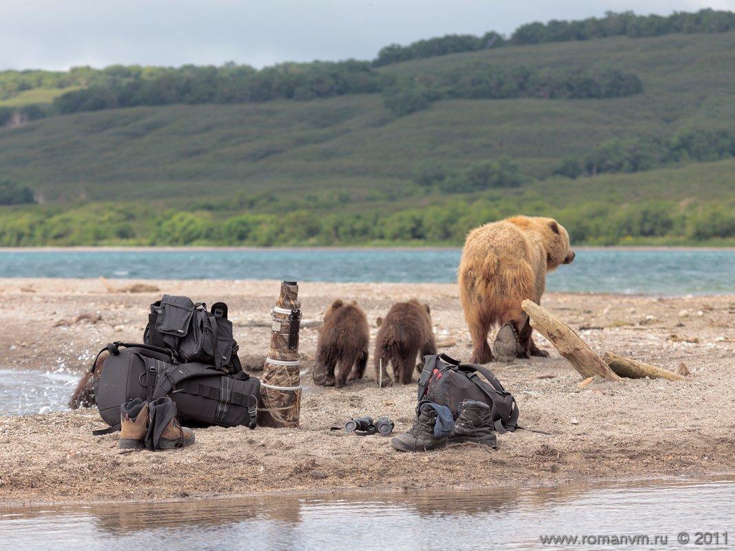 камчатка, медведь, озеро курильское, фототехника, Роман Мурушкин