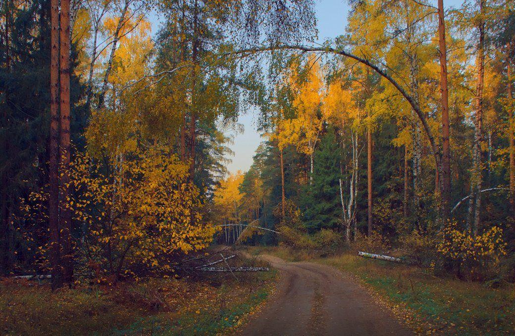 осень, октябрь, мещера, Вячеслав Довыденко