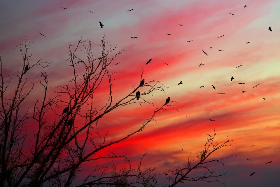 коршун, птица, закат, Наталия Протасова