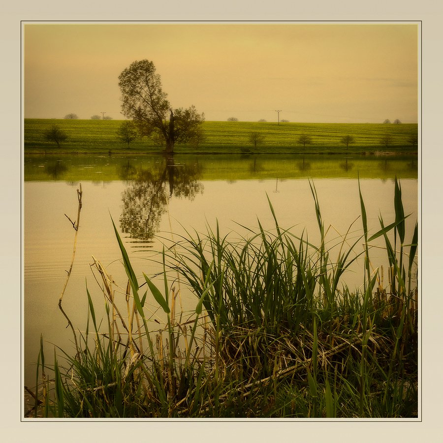 пруд, поле, пейзаж, дерево, Oleg Dmitriev