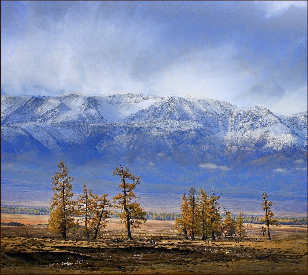 курай, осень, снег, aleks2020