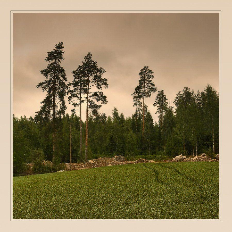пейзаж, сосны, поле, финляндия, Oleg Dmitriev