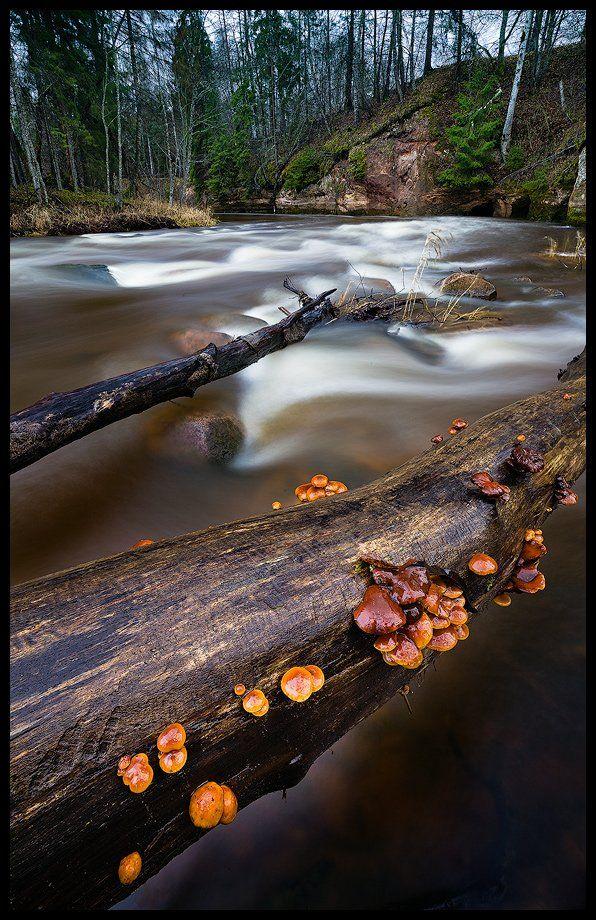 пейзаж, грибы, река, Arturs Barzdis