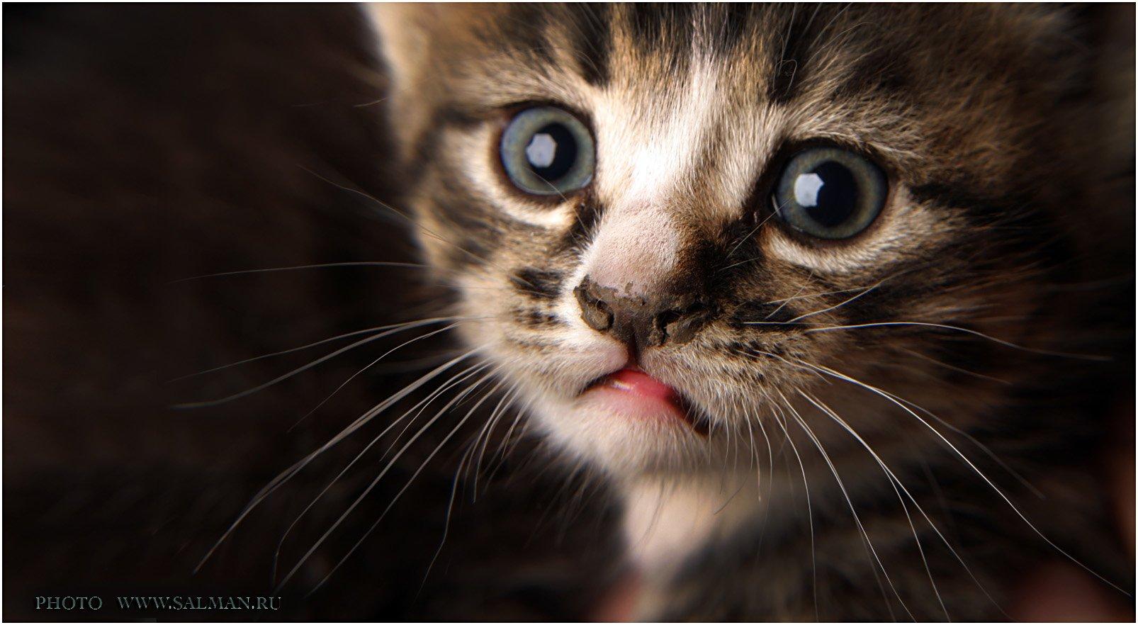 кот,котик,, salman