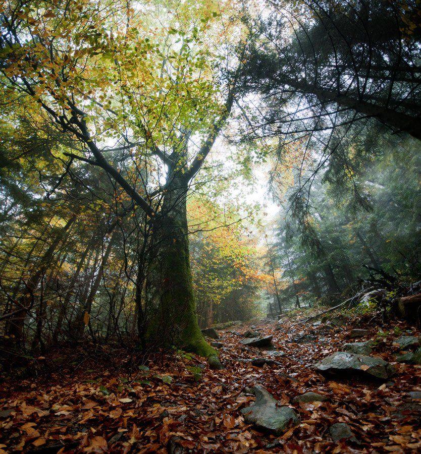 карпаты, природа, пейзаж, лес, туман, панорама, Piligrim