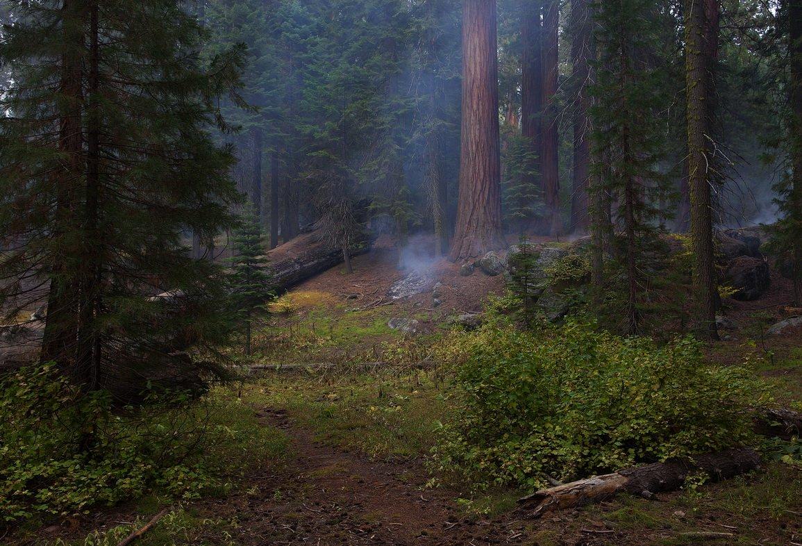 сша, секвойя, лес, sequoia, Екатерина Богданова