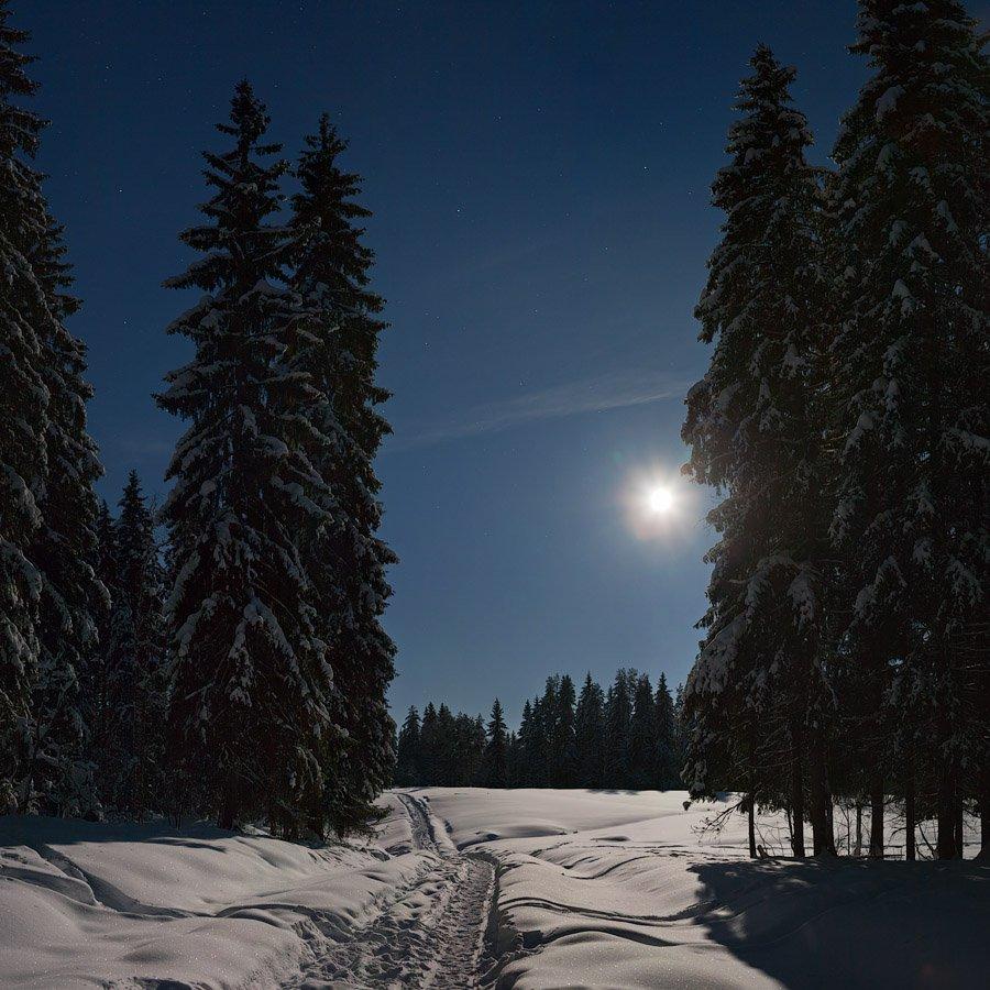 зимний, лес, лунной, ночью, Владимир Кириченко (vlkira)
