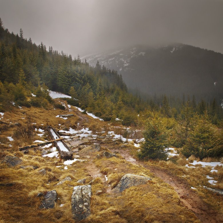 карпаты,смотрич,лес, Михаил Мочалов