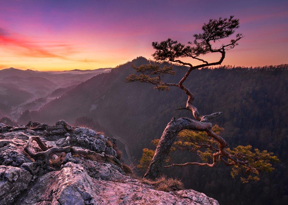landscape,poland,tree,forest,light,mountain,fog, Marcin Kesek