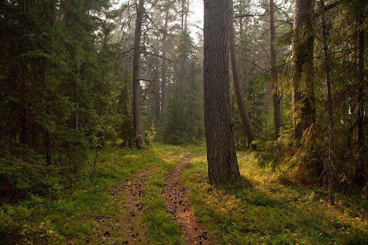 по, лесной, дорожке..., Владимир Кириченко (vlkira)