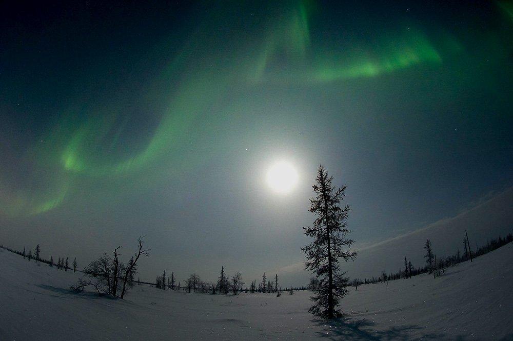 aurora borealis,  северное сияние,   ночной пейзаж ,  север,, den-sau-pin